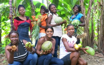 Can NGOs contribute to the strengthening of small farmers' agriculture in Haiti?